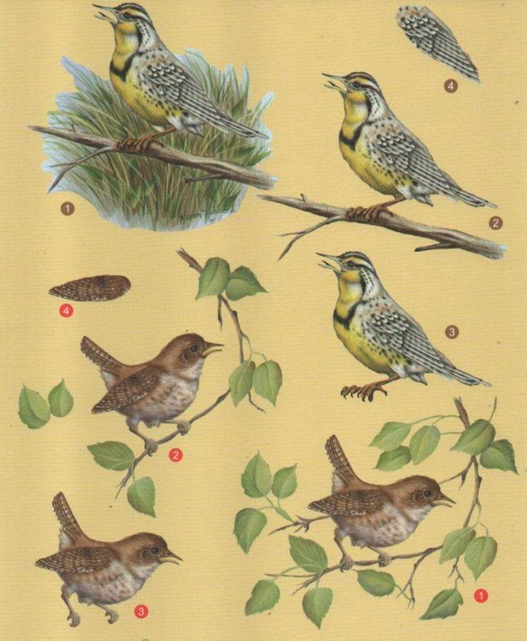 Feuille 3D oiseau brun pour carte 3D