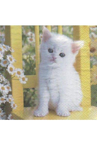 Serviette papier chaton blanc 33cm X 33 cm 3 plis
