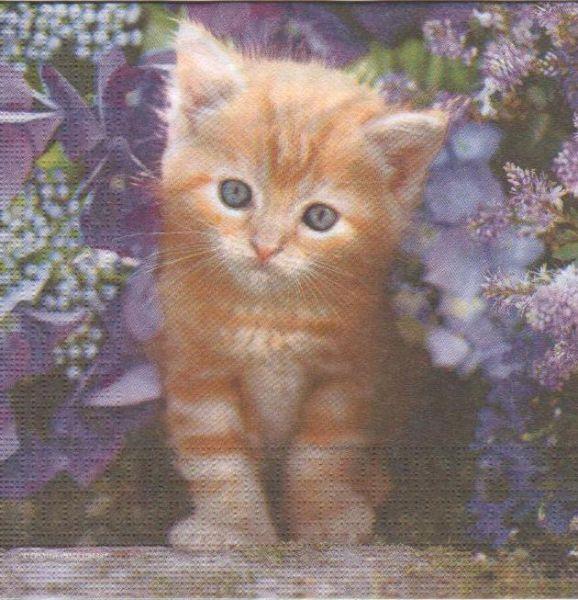 Serviette papier chaton et fleurs 33cm X 33 cm 3 plis