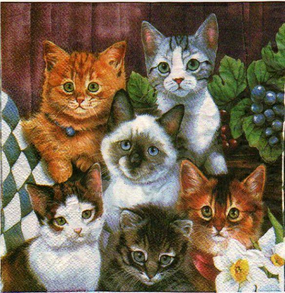Serviette papier 6 chats 33cm X 33 cm 2 plis