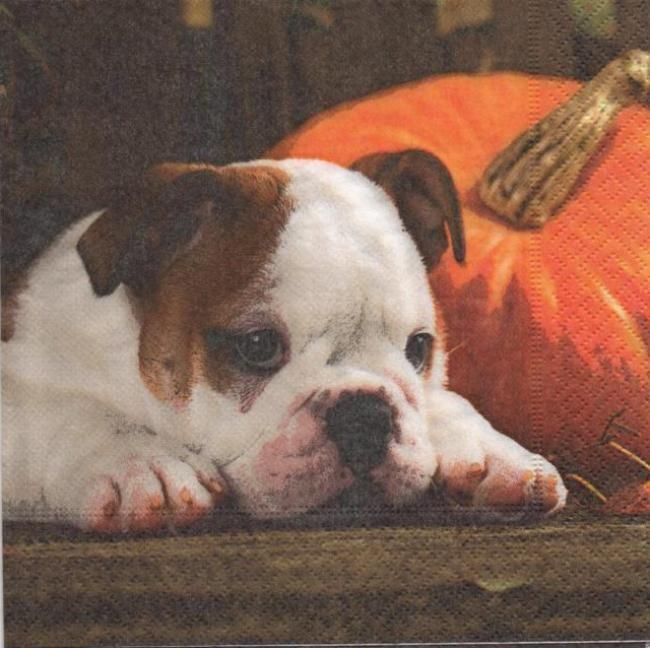 Serviette papier chien et Automne 33 cm X 33 cm 3 plis