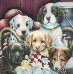 Serviette papier 5 chiens 33cm X 33 cm 2 plis