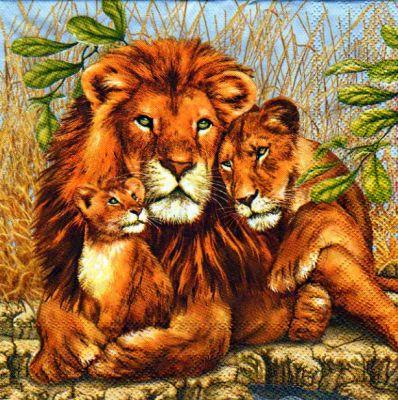 Serviette papier Famille Lions 33cm X 33 cm 3 plis