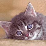 Serviette papier chat et coussin  33 cm X 33 cm 3 plis