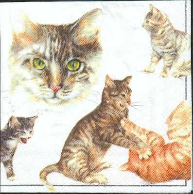 Serviette papier  motif chats joueurs 33 cm X 33 cm 3 plis