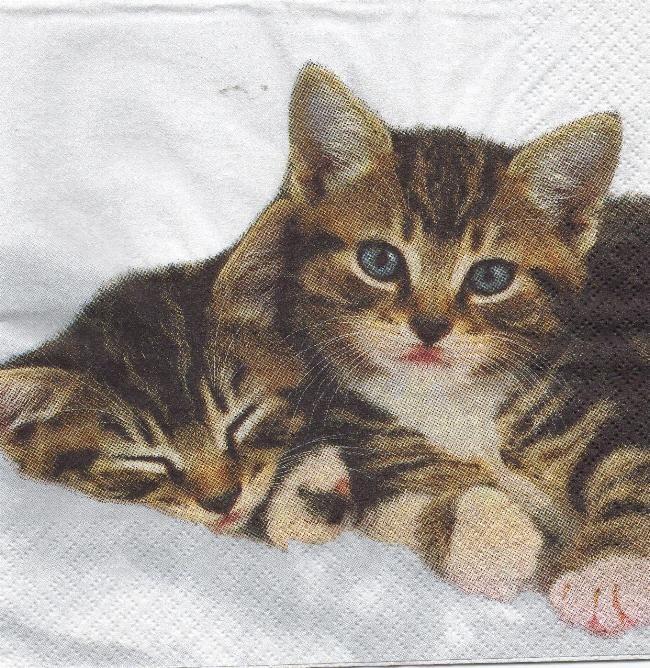 Serviette papier 2 petits chatons 33 cm X 33 cm 3 plis