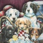 Serviette papier 5 chiens 33 cm X 33 cm 2 plis