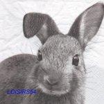 Serviette papier lapin gris- 33 cm x 33 cm