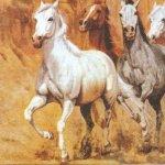 Serviette papier chevaux sauvages 33 cm X 33 cm 3 plis