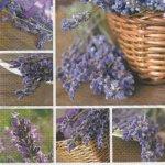 Serviette papier Lavendin et Provence 33 cm X 33 cm 3 plis