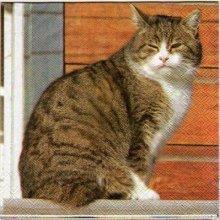 Serviette papier chat sur la fenêtre 33 cm X 33 cm 3 plis
