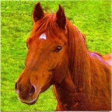 Serviette papier cheval dans la prairie 33cm X 33 cm 3 plis