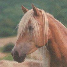 Serviette papier cheval 33cm X 33 cm 3 plis