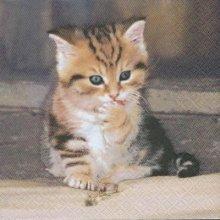 Serviette papier  motif jeune chat  33 cm X 33 cm 3 plis