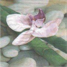 Serviette papier orchidée et bambou 33cm X 33 cm 3 plis