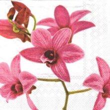 Serviette papier orchidée 33 cm x 33 cm 3 plis