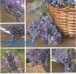 Serviette papier Lavendin et Provence - 33 cm x 33 cm